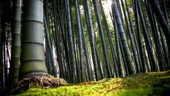 Bamboo Wallpaper 6502