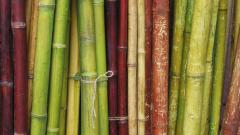 Bamboo Wallpaper 6505