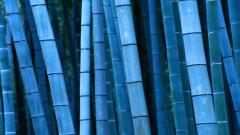 Bamboo Wallpaper 6508
