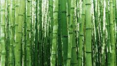 Bamboo Wallpaper 6511
