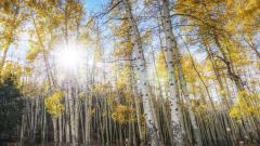 Beautiful Aspen Wallpaper 30454