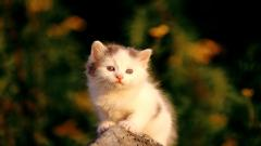 Cute Baby Cat 30571