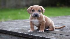 Cute Pets 20725