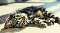 Free Baby Cat Wallpaper 30570