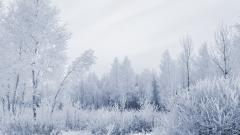 Free Frost Wallpaper 29700