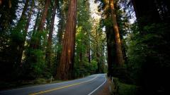Free Redwood Wallpaper 31334