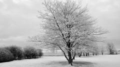 Frost Wallpaper 29698