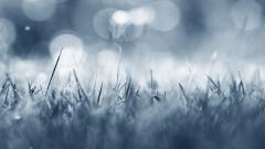 Frost Wallpaper 29706