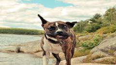 Funny Pets 20728