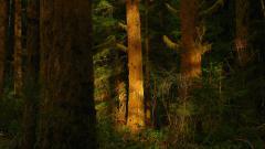 Redwood 31343