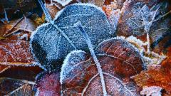 Stunning Frost Wallpaper 29705