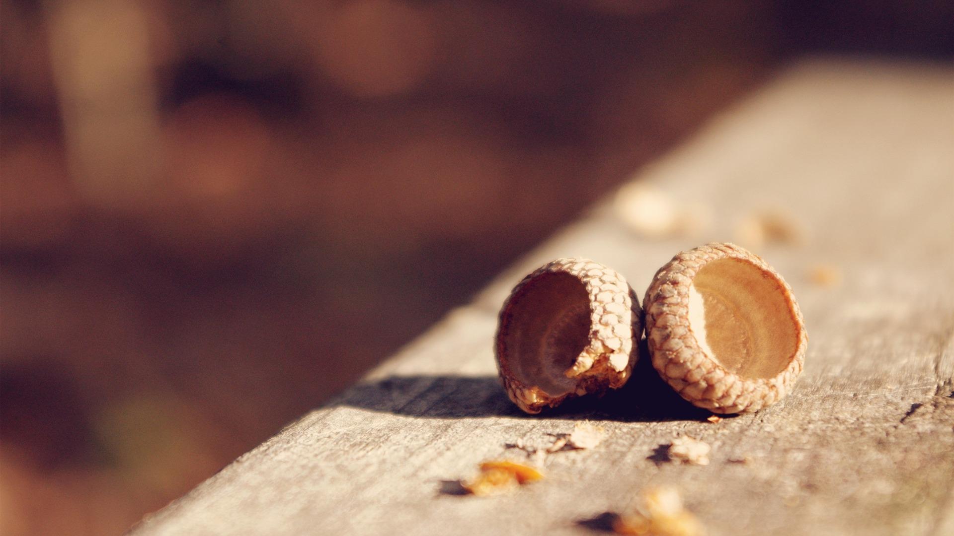 acorn wallpaper 23363