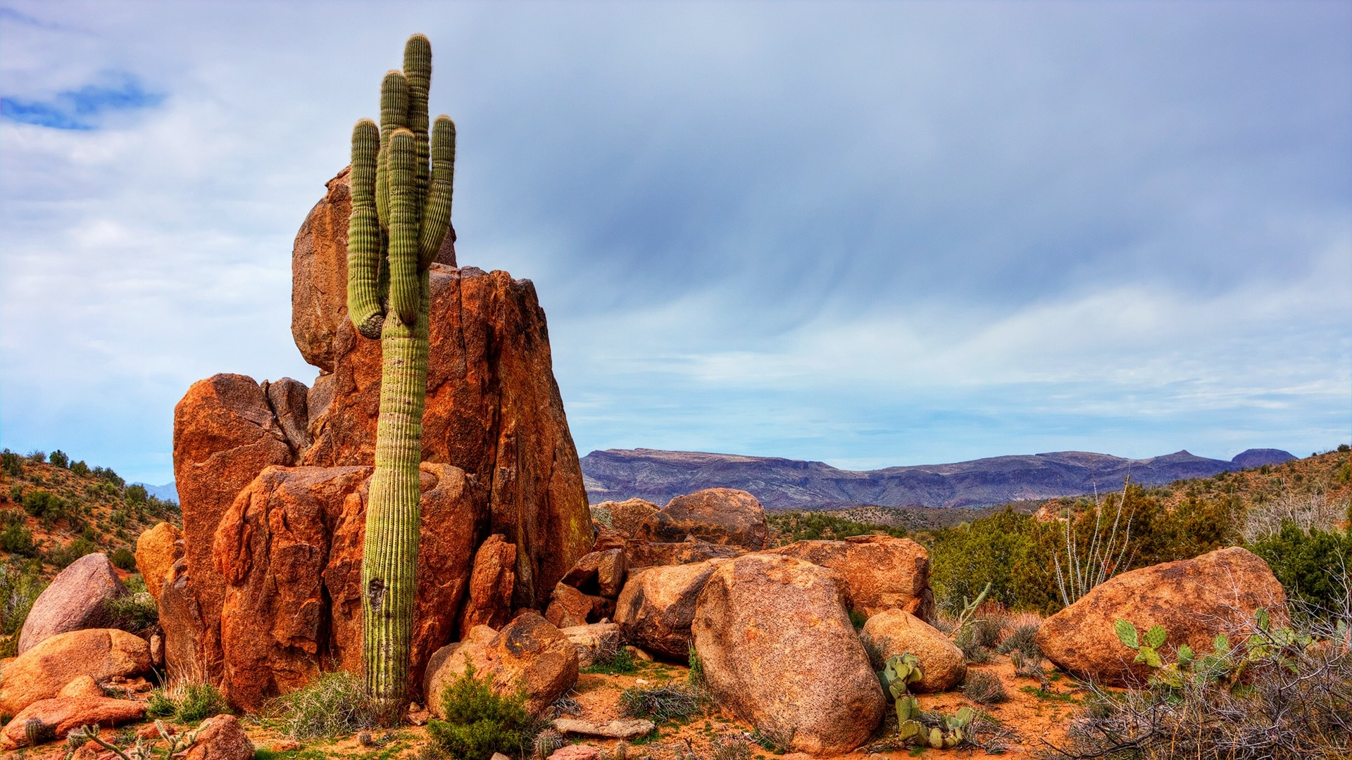 amazing saguaro wallpaper 41781