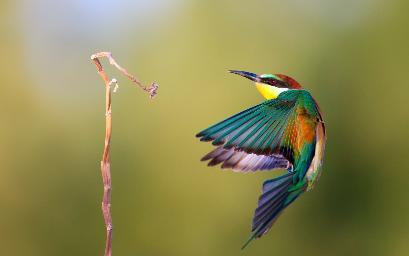 Awesome Bird Wallpaper 41738 1680x1050 px HDWallSourcecom