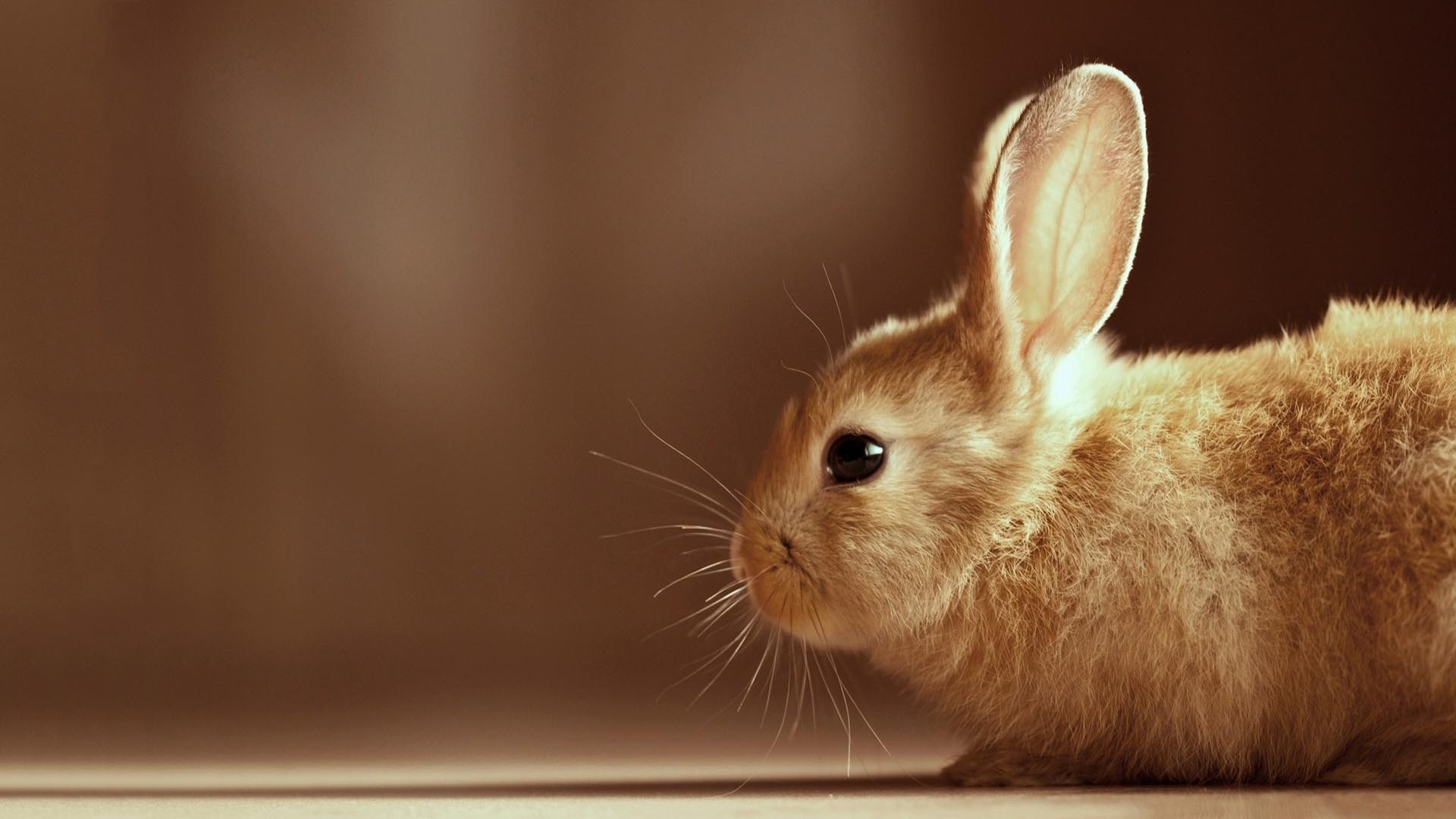 awesome bunny wallpaper 41767