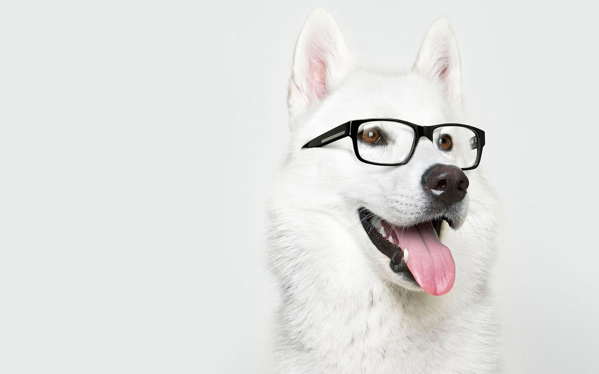 awesome dog with glasses wallpaper 40031