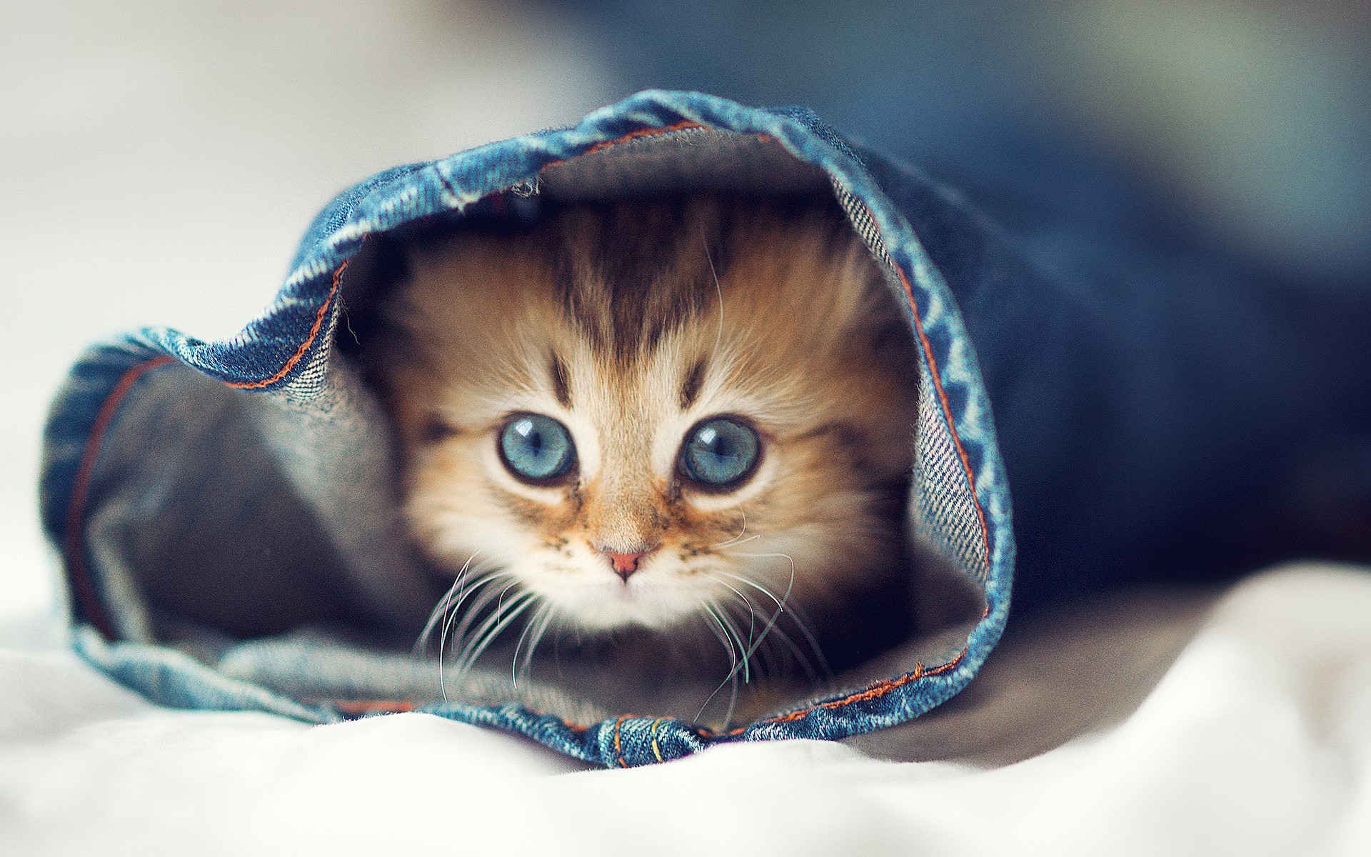 cute cats 18592