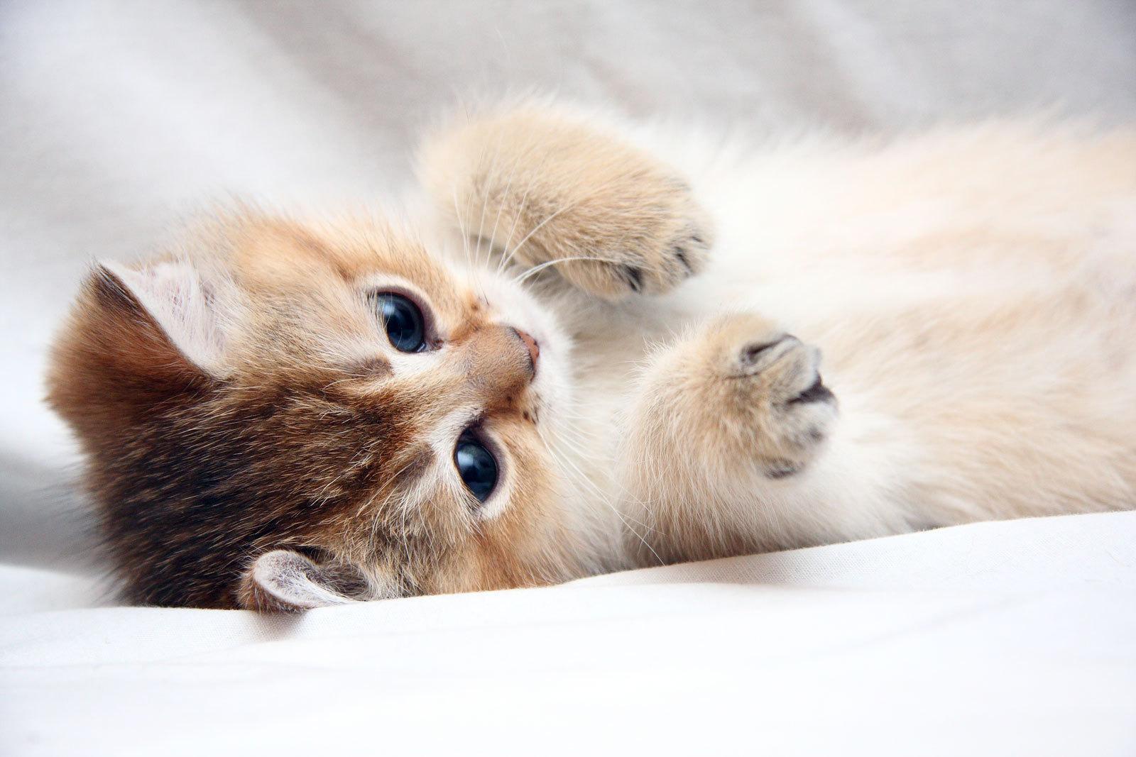 cute cats 18596
