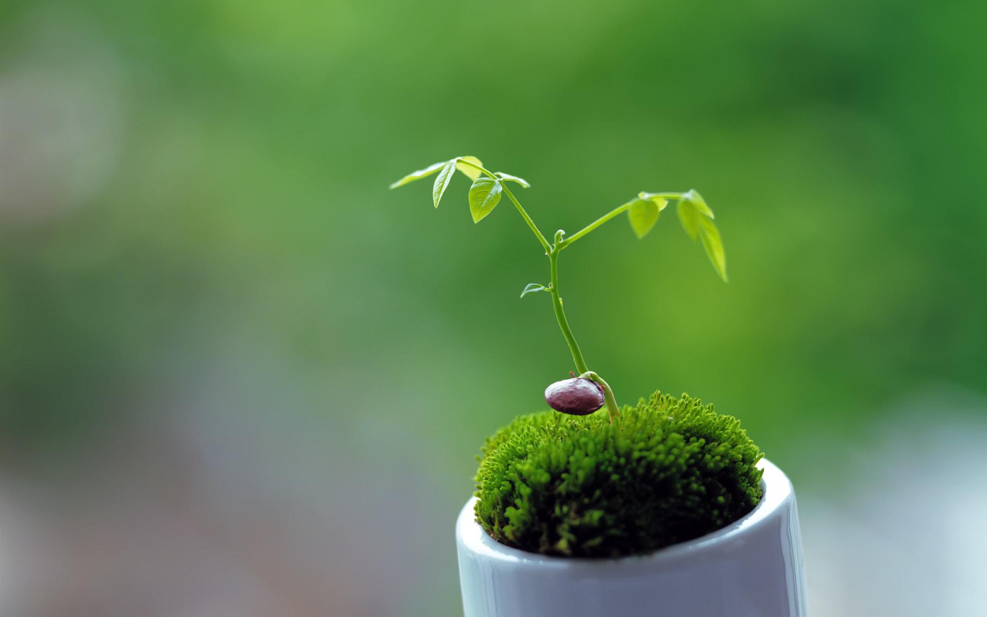 cute plant wallpaper 41751