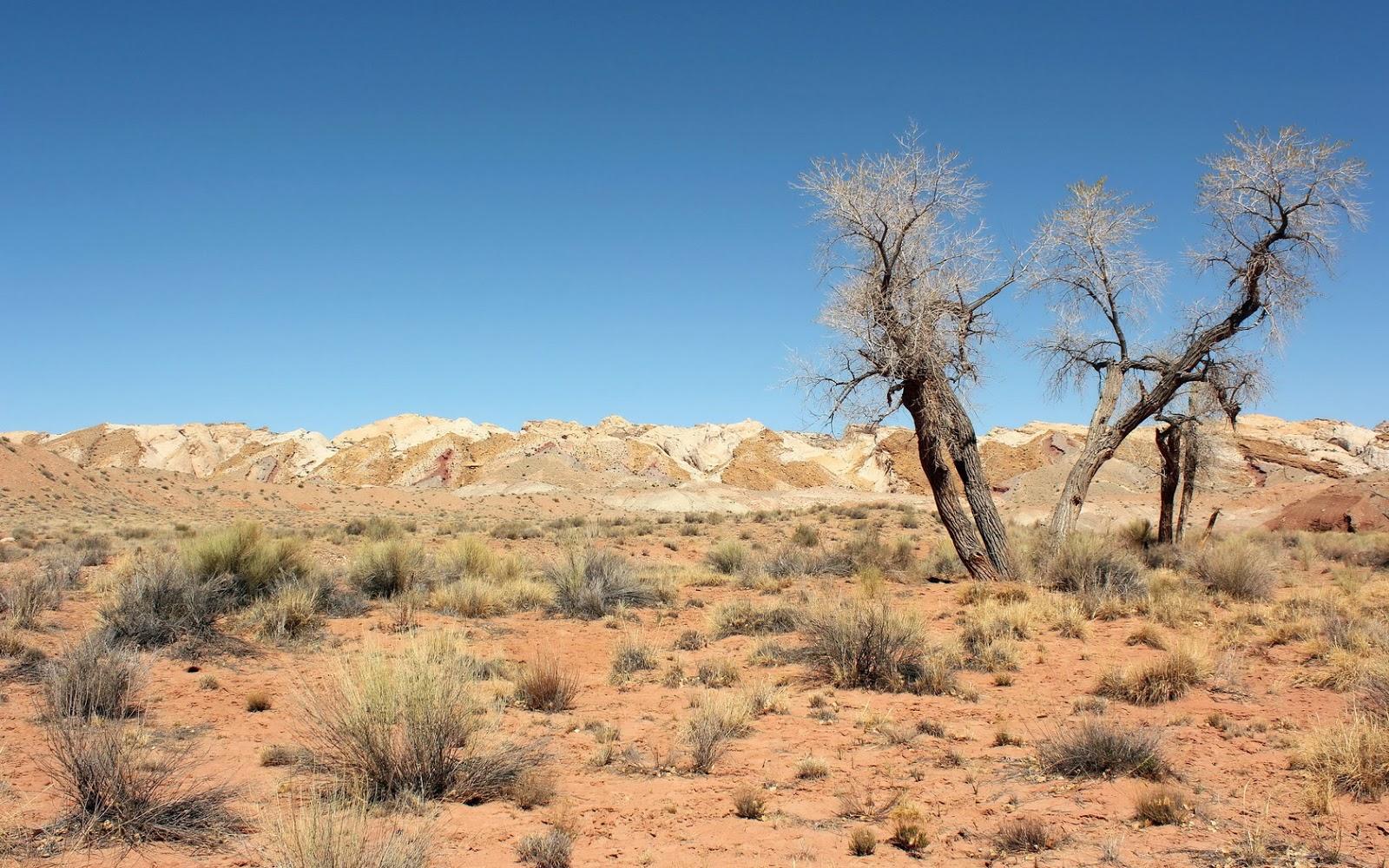Desert wallpaper 41777 1600x1000 px for Desert landscape