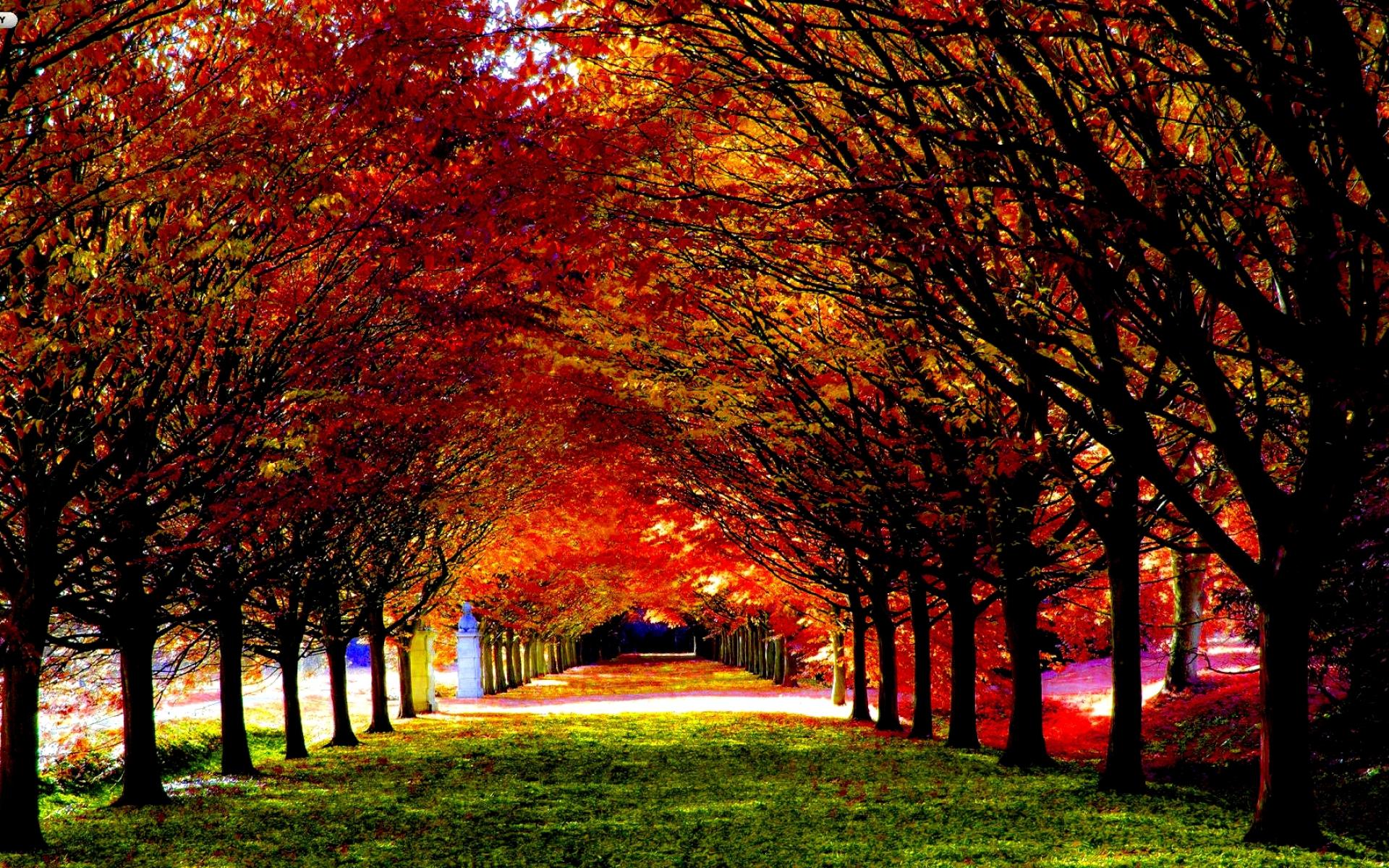 Fall Wallpaper 15891 1920x1200 px ~ HDWallSource.com