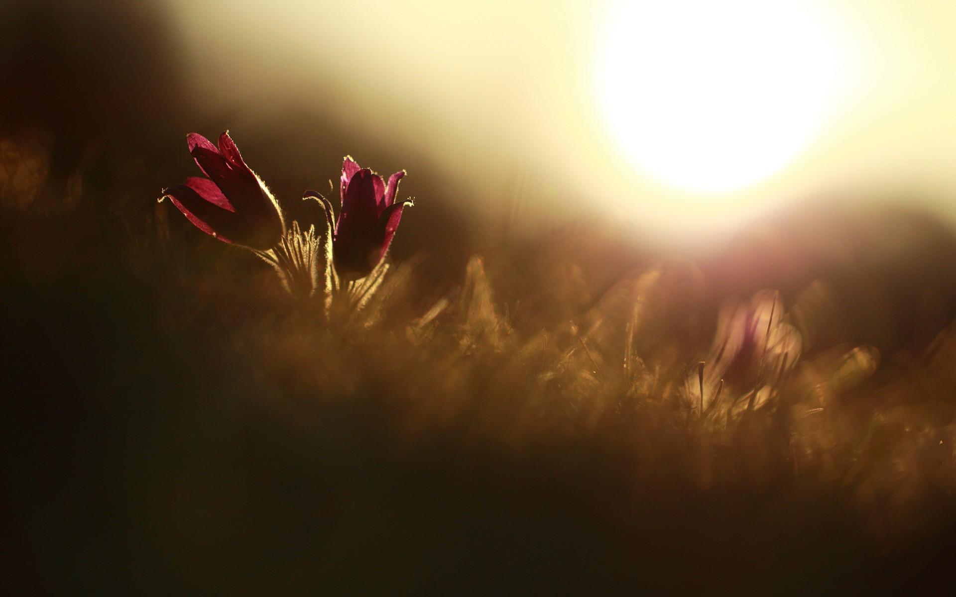 fantastic macro flowers 34768