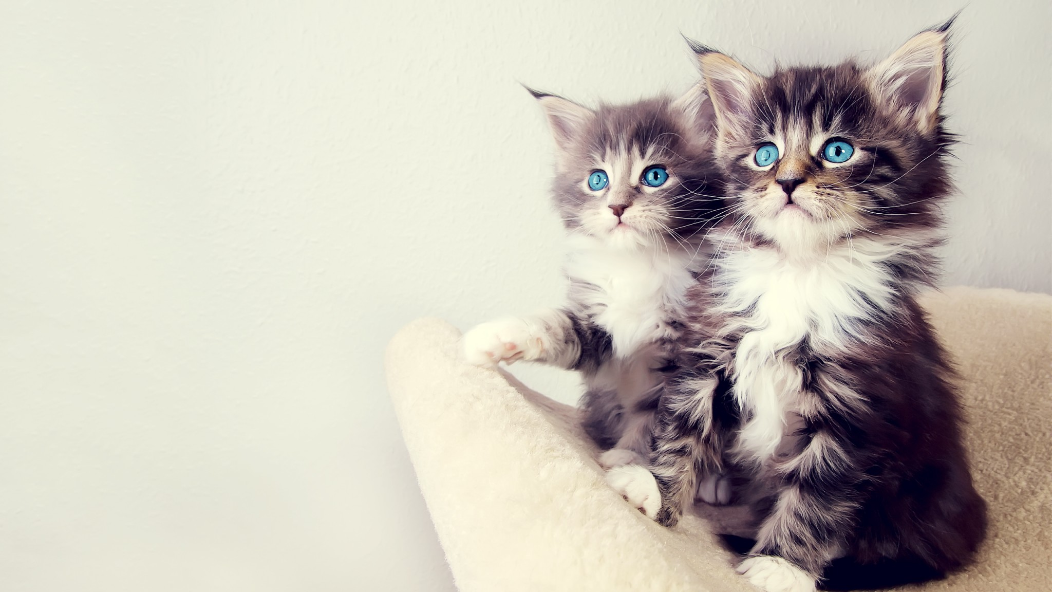free cute cat wallpaper 18593