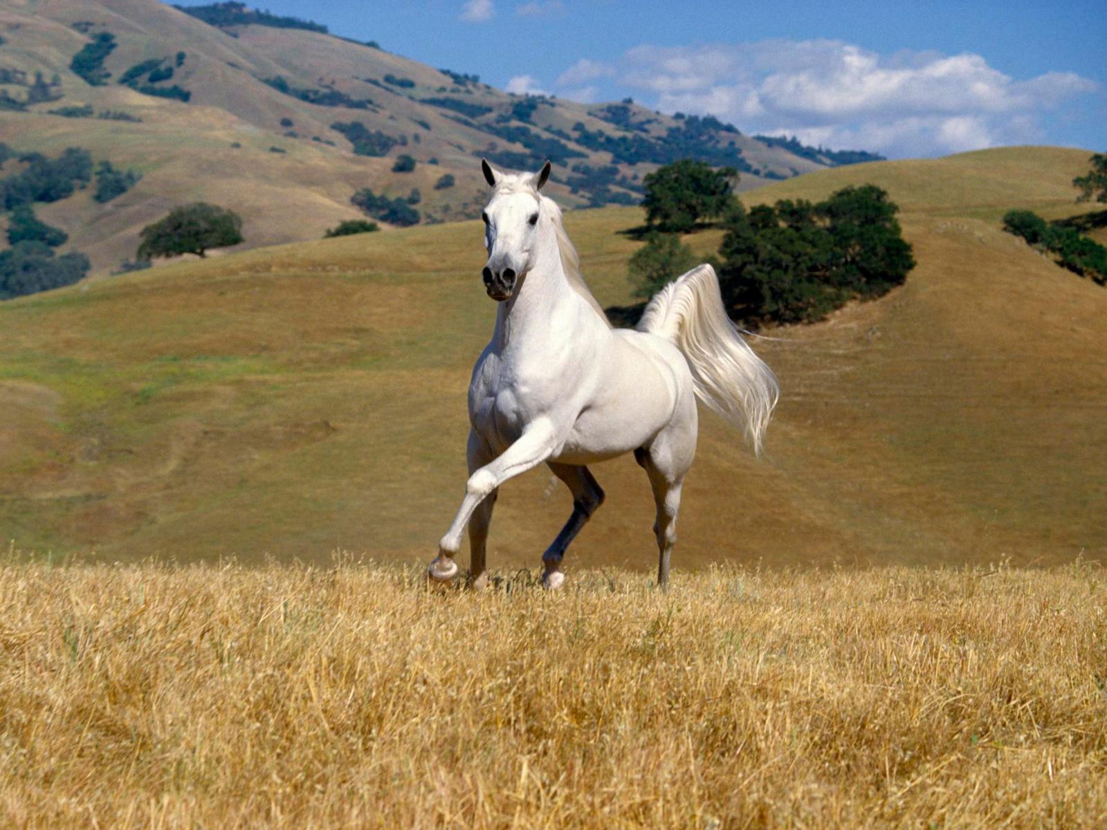 free horse wallpaper hd 19882