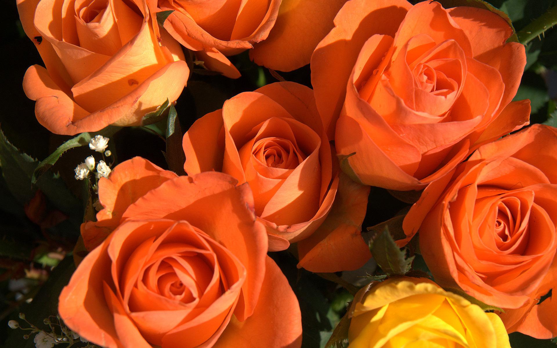 free orange roses wallpaper 29741