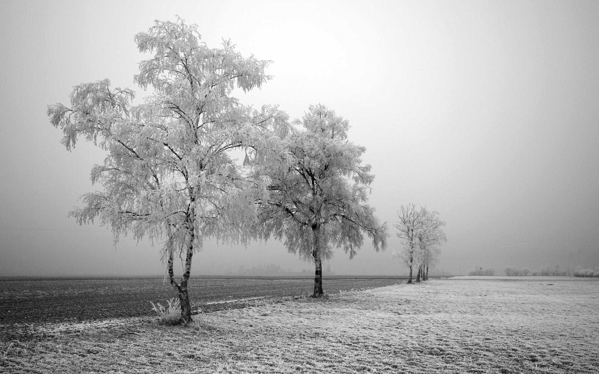frosted wallpaper 29725