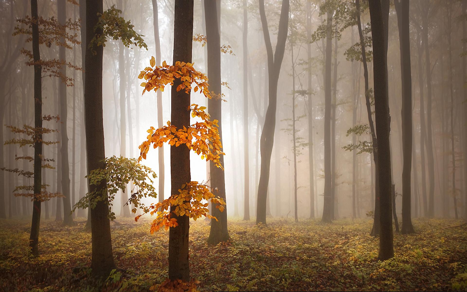 lovely fog wallpaper 36644