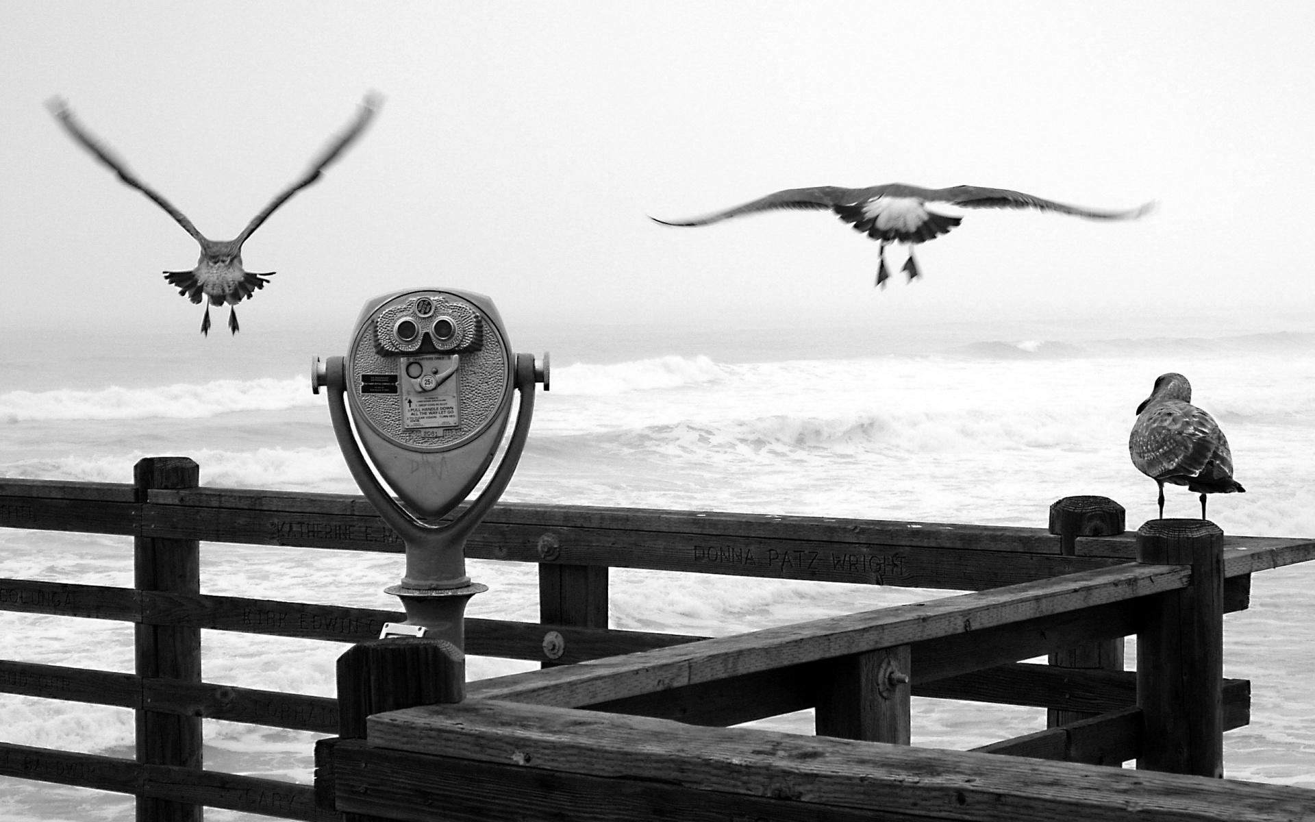 monochrome seagulls wallpaper 44373