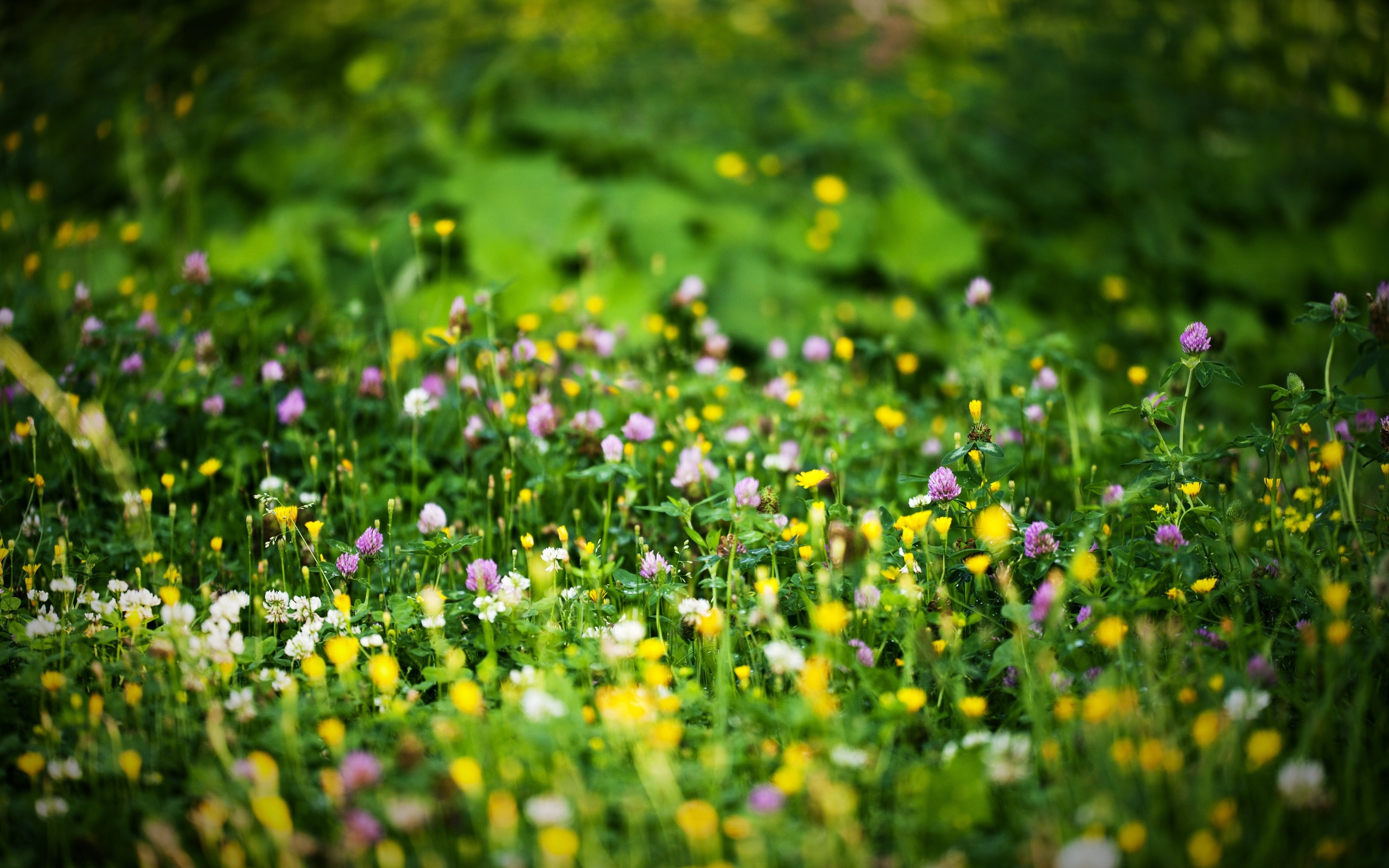 nature bokeh wallpaper 33906