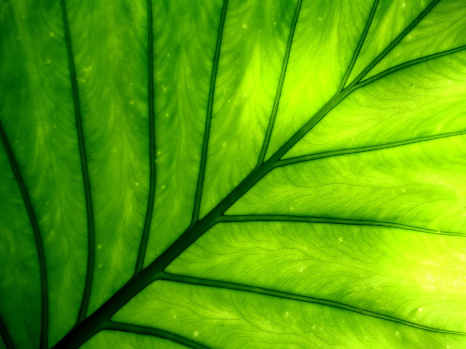 Amazing Plant Wallpaper 41758