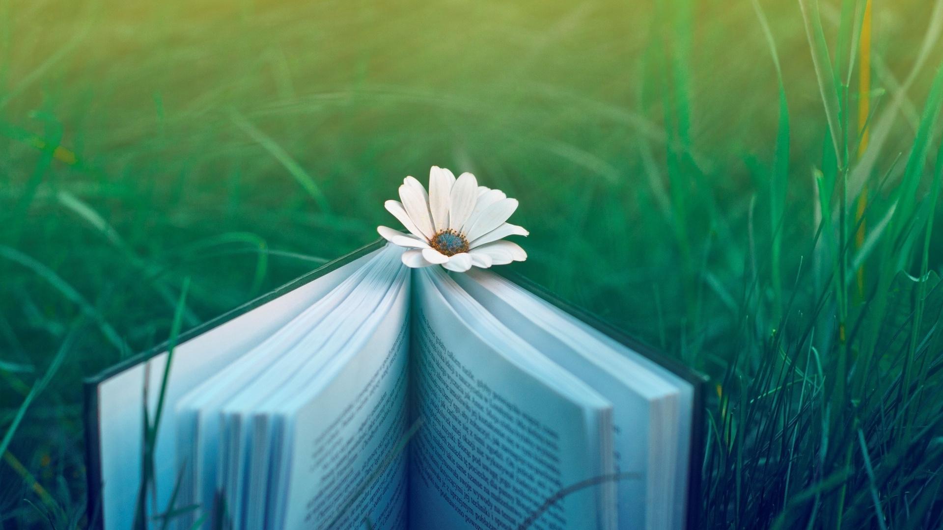 pretty book wallpaper 41790