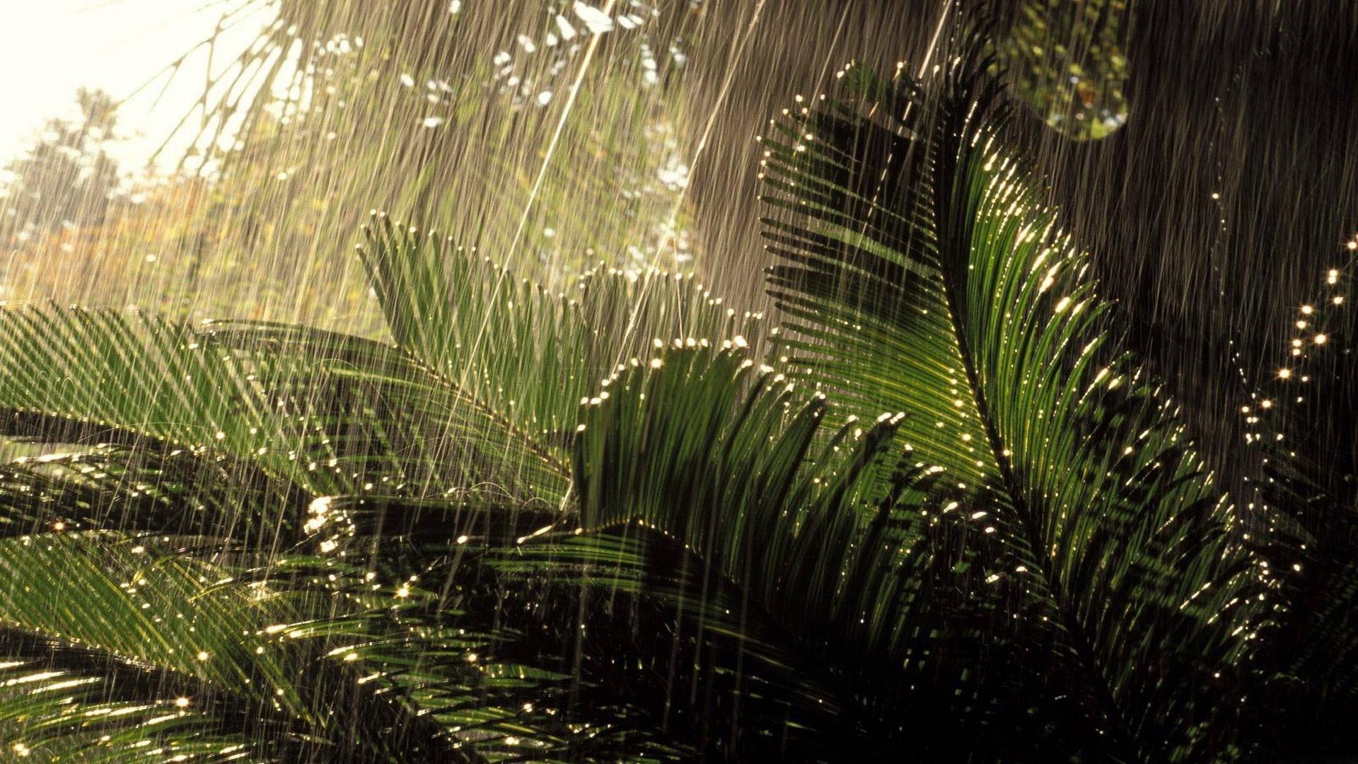 rain live wallpaper free download