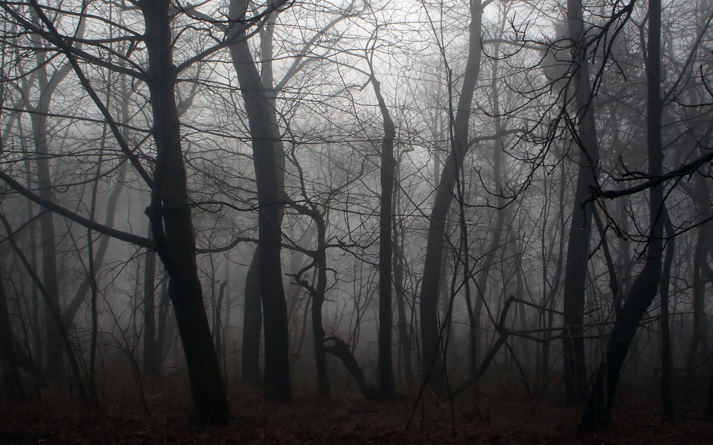 Spooky Forest Backgrounds 18574 1440x900 Px Hdwallsource Com