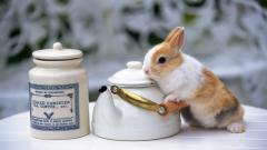 Adorable Bunny Wallpaper 41765