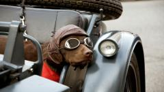 Adorable Dog Aviator Glasses Wallpaper 44377