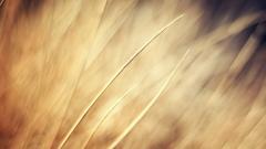 Amazing Grass Bokeh Wallpaper 33912