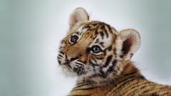 Baby Animal 34408