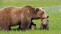 Baby Animal Background 34416