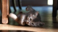 Baby Animal Wallpapers 34418