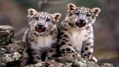 Baby Animals 34415