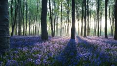 Beautiful Forest Background 18566
