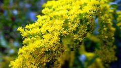 Blooming Yellow Flowers Wallpaper 44638