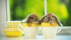Bunny Wallpaper 41766