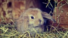 Bunny Wallpaper 41768