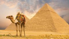 Camel Wallpaper 21146