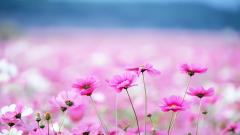 Cute Backgrounds 16982